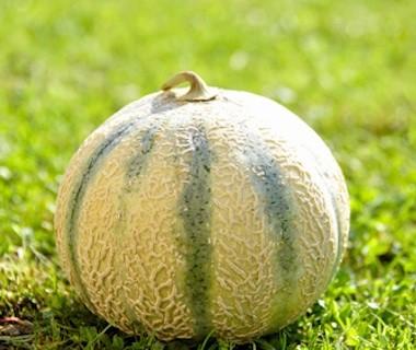 Bio Melon Cantaloup (IT) Coop. Interbio
