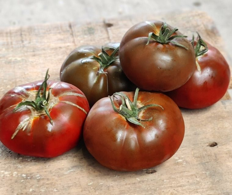 Bio Tomates brunes type Kumato Francis Kestemont