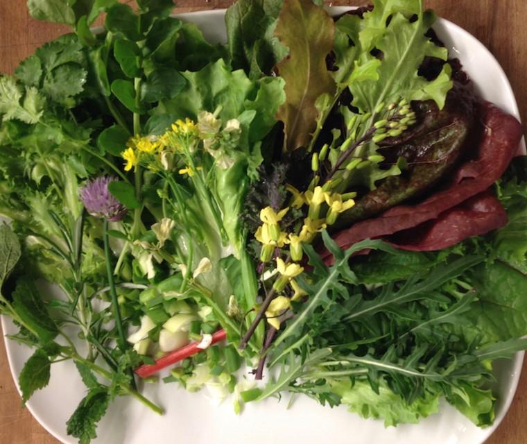 Bio Salade Jazzy (15 variétés) Vert d'Iris